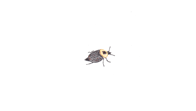 Insect 04