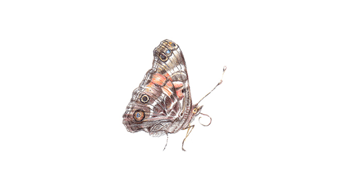 Insect 08