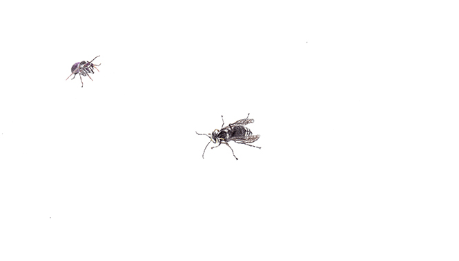 Insect 19