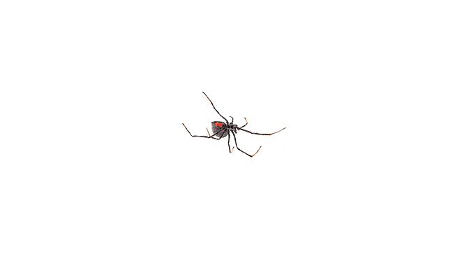 Spider 32