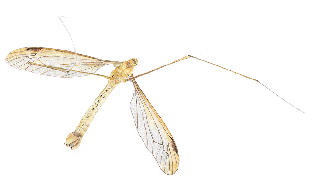 insect48
