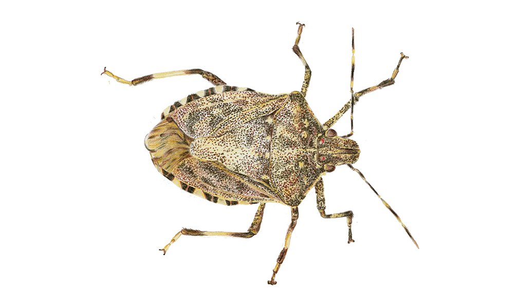 insect46.8