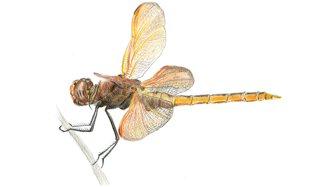 insect52