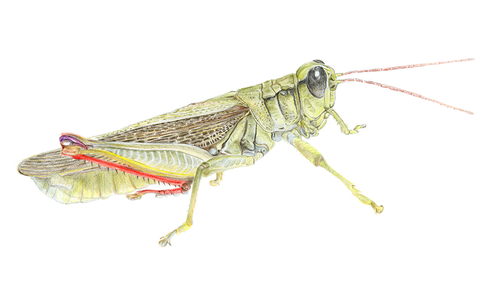 insect54